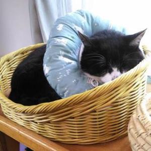 連休と、猫の様子