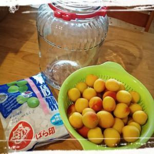 梅シロップを作る