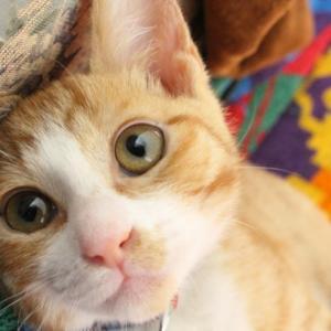 ネコ好きの、ねこ好きによる、猫好きのための、癒しのパワーチャージ