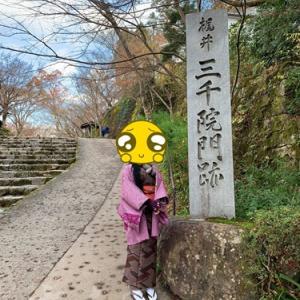 京都~♪大原、三っ千っ院♪【後編】