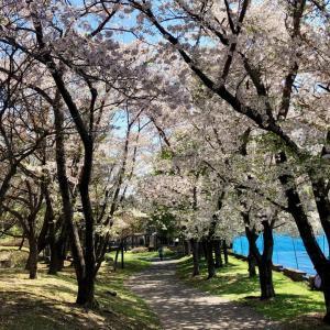 札幌のお花見人気スポット 西野緑道、琴似発寒川の桜を訪ねる・琴似ウォーク(11.0km) 〜JRヘルシーウォーキング2019〜