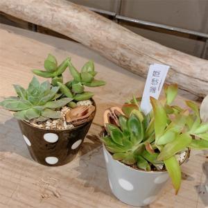 名古屋で植物のワークショップを楽しめるお店「garage NAGOYA(ガレージナゴヤ)」