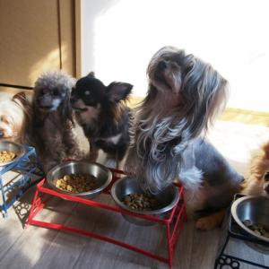犬の手作りご飯の作り方基本ルール!注意点と栄養素とコツ