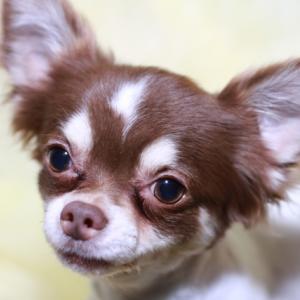 愛犬にオススメな乳酸菌入りドッグフードランキング!効果と注意点