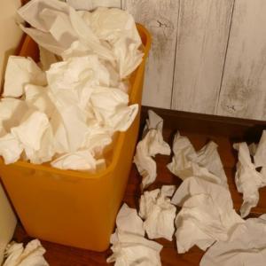 愛犬モコがゴミ箱あさりで嘔吐!嘔吐物の色や形で危険度チェック