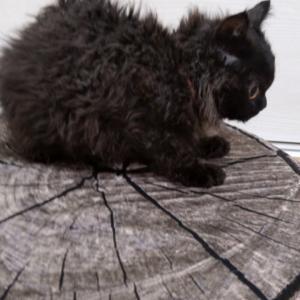 苦戦しました。黒い子猫