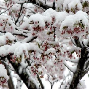 4月の雪、平成最後の雪?