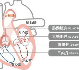 【2019.11入院】①検査、診断と入院まで