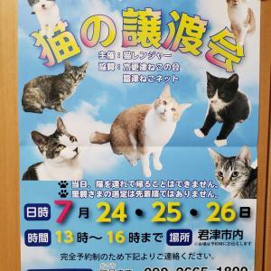 君津で猫の譲渡会が開催されます!(7/24~26)