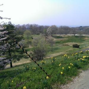 休日にお金を使わず楽しむにはパークゴルフはマジでおすすめ