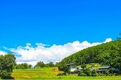ふるさとチョイスで高知県芸西村に寄付した感想体験談