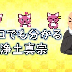 ネコでも分かる浄土真宗 第1回【仏教とは?】