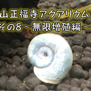 金色山正福寺アクアリウム計画その8~ヤバい⁉ラムズホーン無限増殖か⁉~