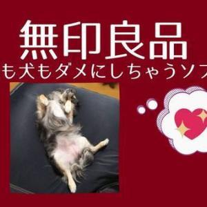 無印良品の体にフィットするソファで犬がダメになってしまった。もちろん人も。