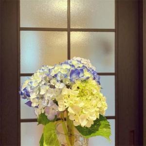 【写真日記】紫陽花を買い トラブルが起こり プラレールを組み立て 夫のご飯をいただき ○×に勝利した6月中旬の日記