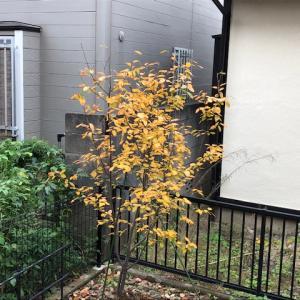 今年の秋はオレンジ色 (;゚Д゚)