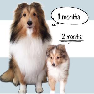 すずちゃん生後11ヶ月  2つの誤算