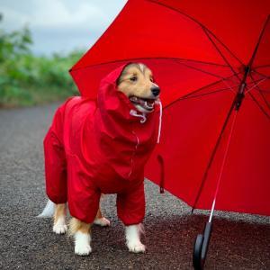 赤いカッパと赤い傘