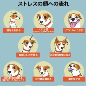 犬のストレスサイン