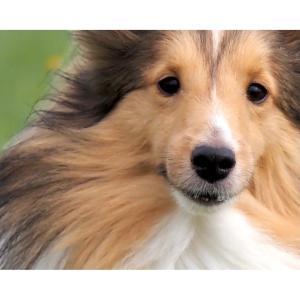 どんな犬でも…どんな犬⁈