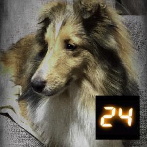 24-TWENTY FOUR -  真夏の原っぱ編