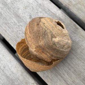 スズメバチの巣駆除:自分で作り始めを取るときは?業者値段は?