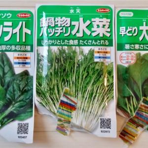 小松菜・ほうれん草・水菜の種まき