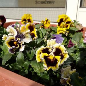 春をおすそ分け!〜我が家で咲き誇るお花たち〜