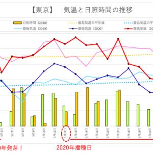 オクラの不発弾 〜昨年との気象条件を比べてみた〜