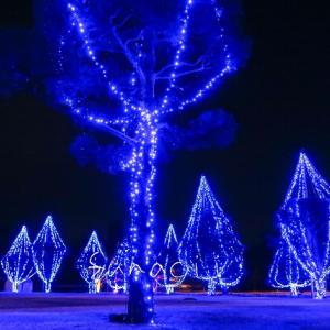 福島県会津若松市鶴ヶ城で3/1迄開催!「アイヅテラス」光の杜ミュージアム 雪吊りを利用したイルミネーションが美しい✨