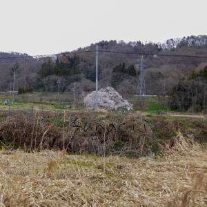 2020年のお花見 会津若松市内おすすめ桜スポットコースを作ってみた✨
