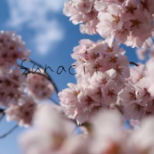 エアお花見にどうぞ!桜風景&初心者による前ボケ写真の撮り方✨