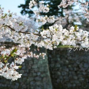 エアお花見🌸桜風景②