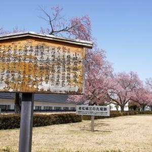 春を探して、カメラ片手に少し早い会津若松桜散歩をしてきました..!2021