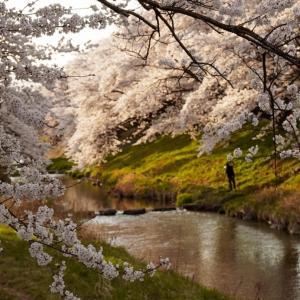 カメラ片手に、郡山市の桜スポットへ行ってきました🌸