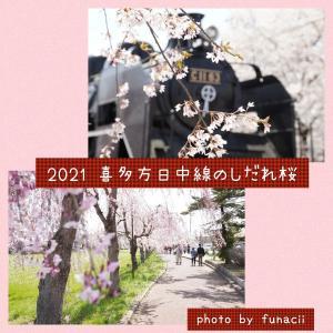 2021年撮影、喜多方市日中線のしだれ桜をフォトブック風に加工してみた!