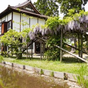 【写真で観光】新緑がまぶしい日本庭園、会津御薬園で満開の藤棚を撮影してきた!