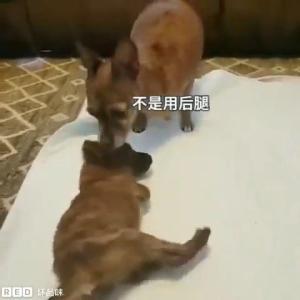 """動画「動物たちの""""辛酸苦楽""""」心痛"""