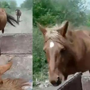 動画「ママ馬とパパ馬の深き愛!!」