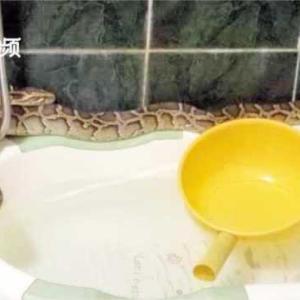 動画「大蛇・八階トイレの中」やだぁ~怖い