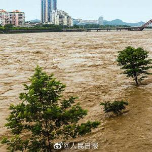 動画「暖心・大洪水中助けられた猫」