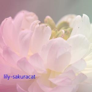 """【太美了! """"蓮の花"""" 】撮影りりー・国営昭和記念公園"""