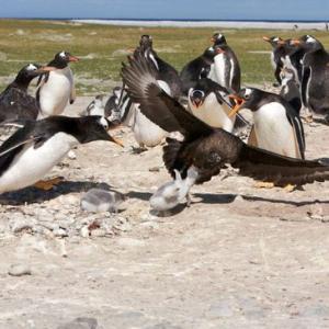 【 ペンギンのママは 心が 壊れそうになって・・・・】