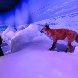 「オホーツク流氷館」で