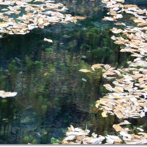 透明度が高い美しい鳥沼でした。