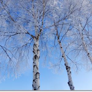 寒さが厳しい日は樹木が真っ白!!