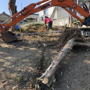 ユンボで坂道造成と木株撤去