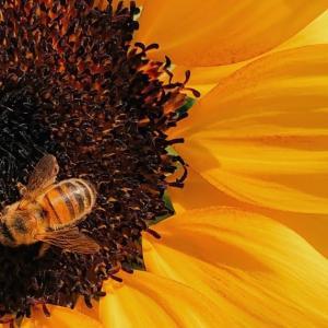スイスでハチに刺されたら? 対処法と薬