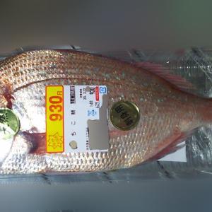 今日のお魚はチコ鯛、こちらをさばいてお刺身に