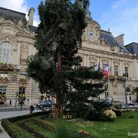【トゥール クリスマスツリー】もみの木のインスタレーション- Sapain de noel